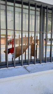 Vandalismo en la 142 del Barrio el Arenal